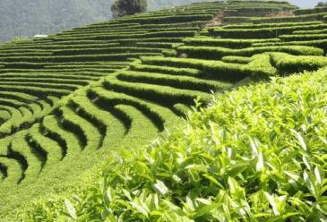 茶叶品牌如何进行线上推广?